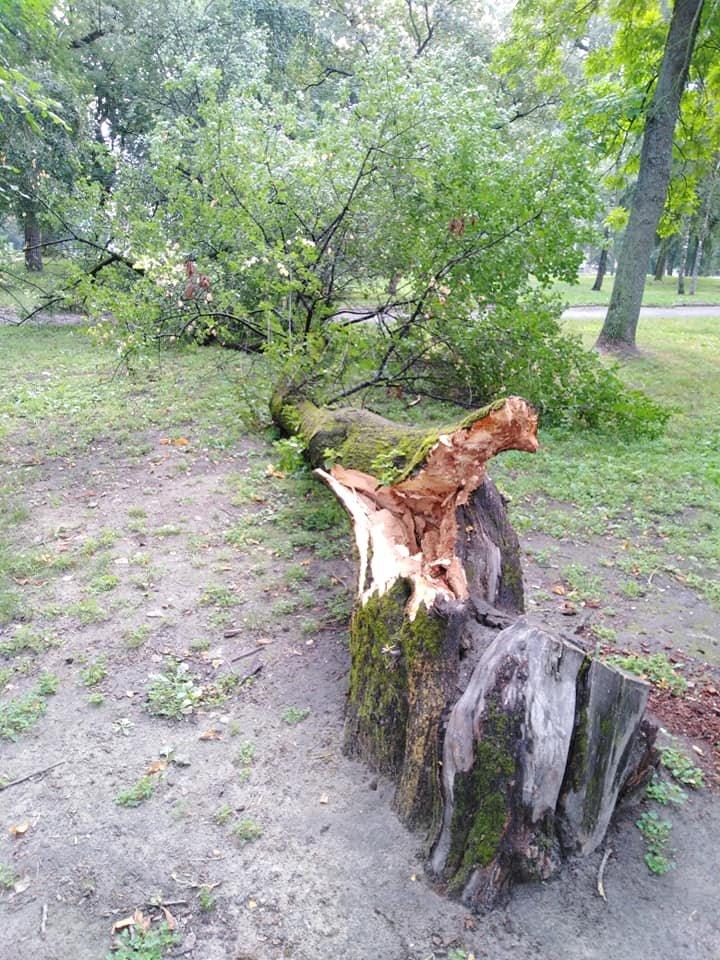 Чернігівський Вал залишився без однієї з вишень Антипок, фото-2