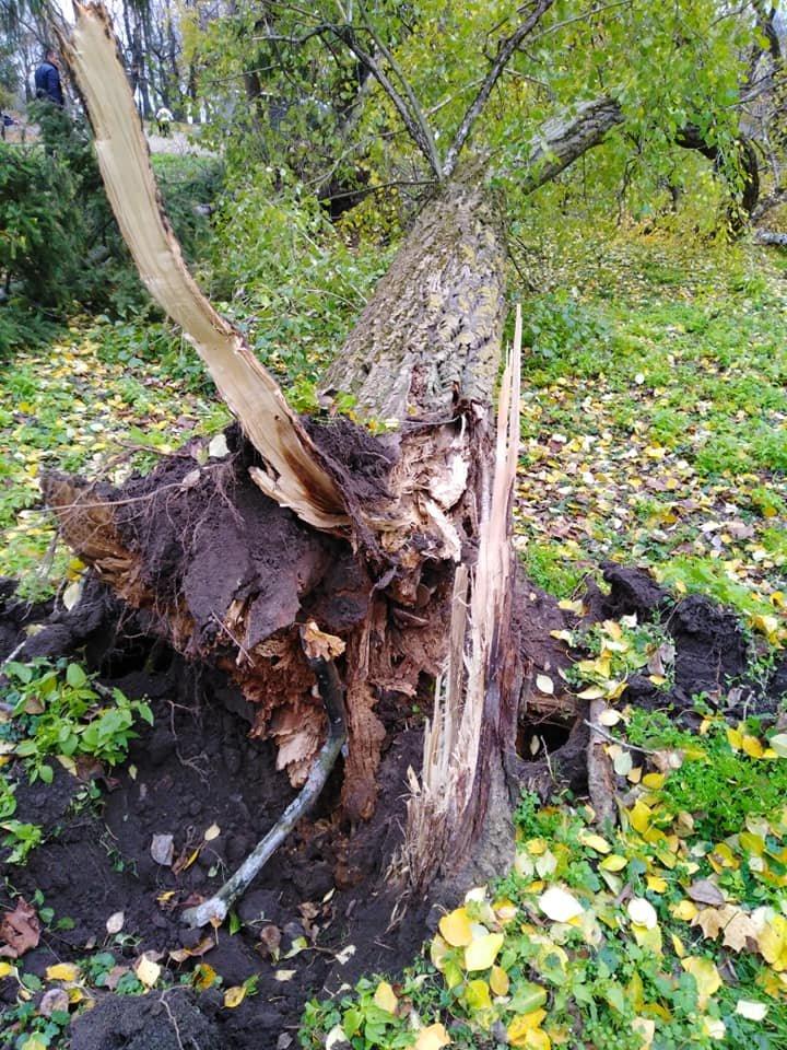 На Валу стався черговий деревопад: одне за одним завалились три дерева, фото-2