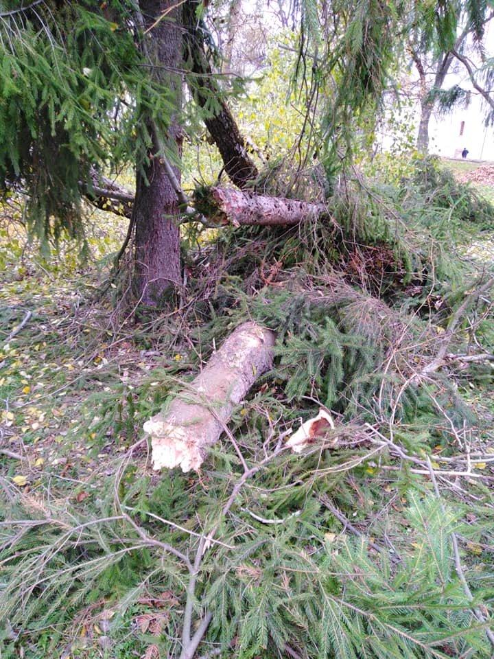 На Валу стався черговий деревопад: одне за одним завалились три дерева, фото-3