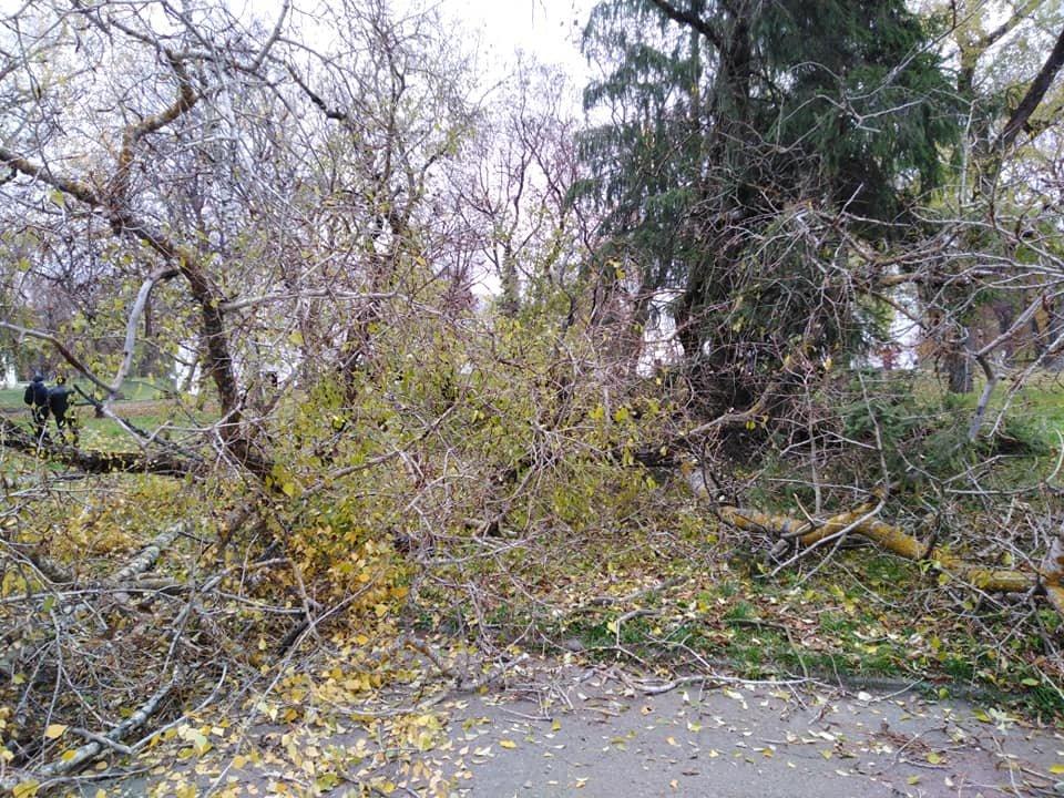 На Валу стався черговий деревопад: одне за одним завалились три дерева, фото-4