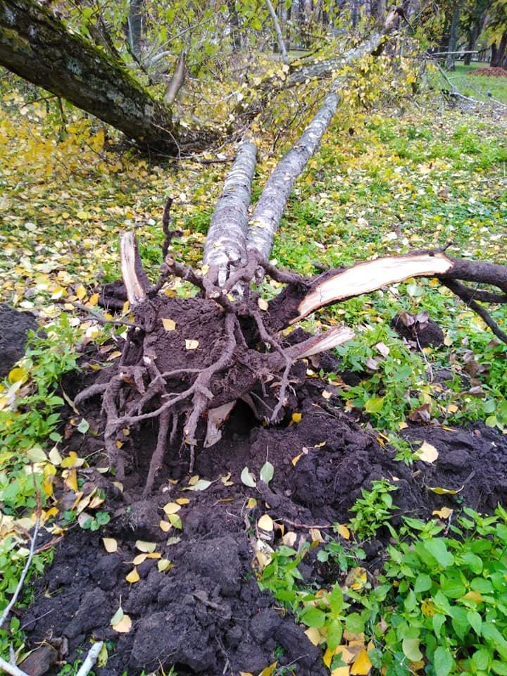 На Валу стався черговий деревопад: одне за одним завалились три дерева, фото-5