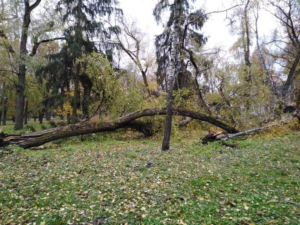 На Валу стався черговий деревопад: одне за одним завалились три дерева, фото-1